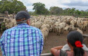 Romero Jucá ao lado de indígena observam o gado em comunidade de Roraima