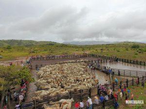Imagem aérea de gado em Uiramutã destinado por Jucá aos indígenas