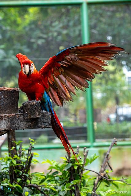 Pássaro lindo descansando em uma das dezenas de árvores do parque